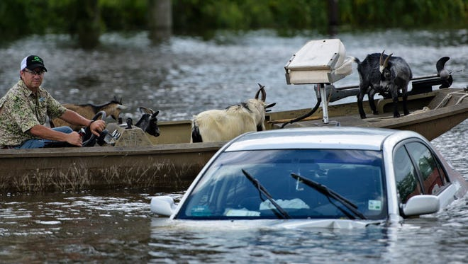 A man navigates a boat of rescued goats past a partially submerged car after flooding on Aug. 16, 2016, in Gonzales, La.