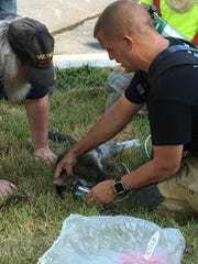 A cat with smoke inhalation was resuscitated by a Hampton Fire Co. lieutenant at the Glen Gardner condo fire Wednesday.