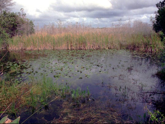 Storm clouds form over the Florida Everglades, which are facing an environmental storm caused by pollution and man's interference with the ecosystem. The manipulating of natural water and draining hundreds of acres for development has contributed to this storm, conservationists say. Phosphorus is being allowed to run off into the system, and environmentalists blame the sugar industry.