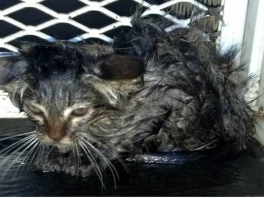 A kitten was rescued from a drain pipe in Indio Monday