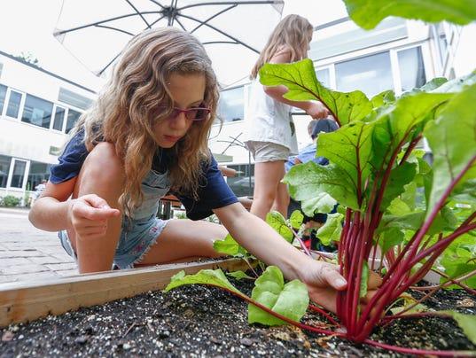 Addison Marusic Viola Elementary School Vegetable Garden