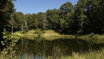 Study: Trees may worsen Southeastern pollution