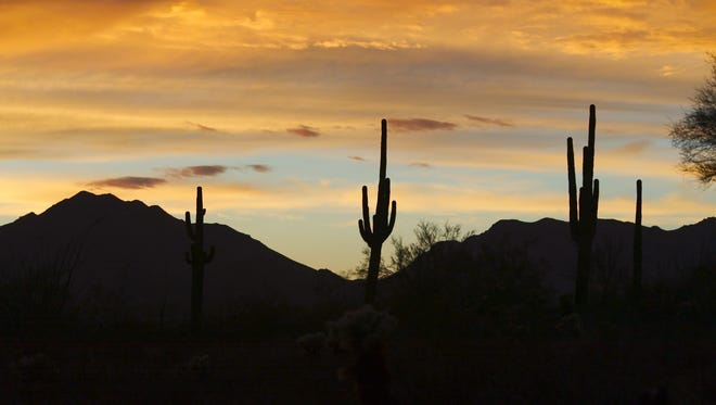 2. The saguaro cactus can only be found in the Sonoran desert.