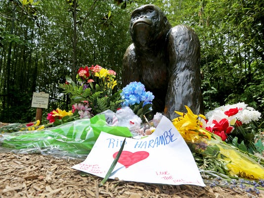 May 31, 2016: Cincinnati Zoo and Botanical Garden, Harambe, Gorillas,  Liz Dufour