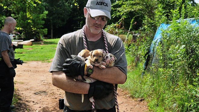 Puppies are carried by an official at a home in Auburn, Ala., Aug. 23, 2013. A federal and state investigation into dog fighting and gambling has resulted in the arrest of 12 people from Alabama, Georgia, Mississippi and Texas.