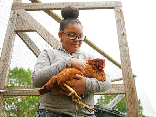 Elevent-year-old Mydia Pritchett, a sixth grader at George Read Middle School, holds a chicken that is being raised by William Penn High School students in the agriculture program earlier this year. Farm animals like chickens could be used for emotional support if City Council passes an ordinance.