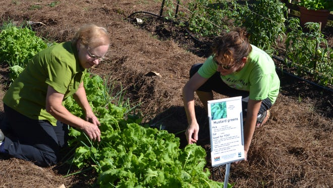 Good Food Project Director Frances Boudreaux (left) and Community Gardens Manager Cindy Baker check a bed of mustard greens at the organization's demonstration garden.