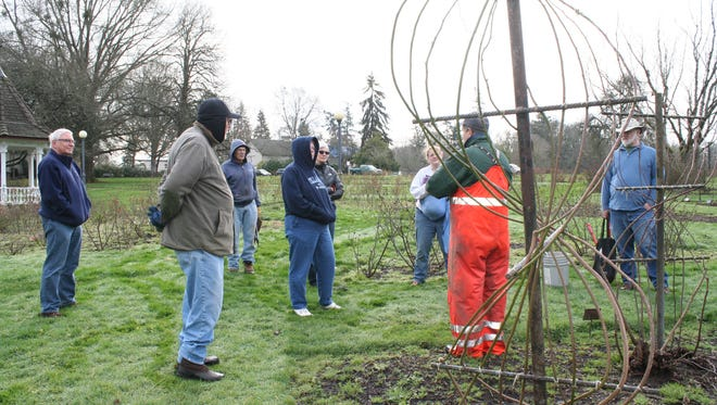 Horticulturist Tom Beatty answers questions in the climbing rose garden during the rose pruning workshop in Bush's Pasture Park Municipal Rose Garden on February 13.