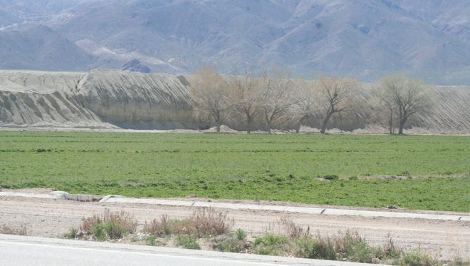 Alfalfa grows in a field next to the the tailings pile at the former Anaconda Mine outside Yerington.