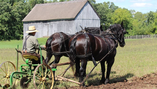 Ron Luebke and his team of Percherons turn the soil on one of the historic farms at Old World Wisconsin on Labor Day Weekend.