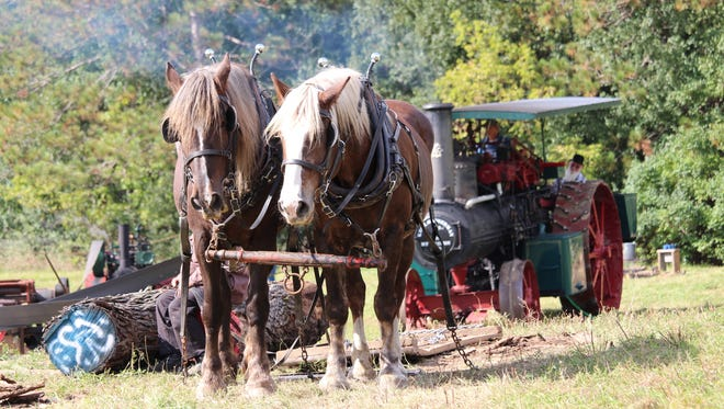 Ron Luebke brings his team of percherons pulling logs on a stone boat up to the steam powered engine driving the sawmill at Old World Wisconsin.