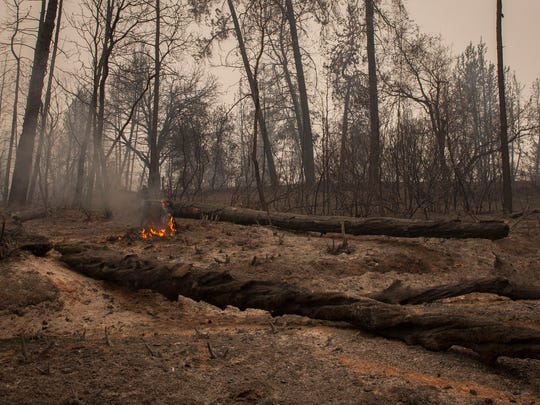 A small fire still burns among other burned out trees near Whiskeytown Lake along Highway 299 in the Whiskeytown National Recreation Area on Monday, July 31, 2018 near Redding.