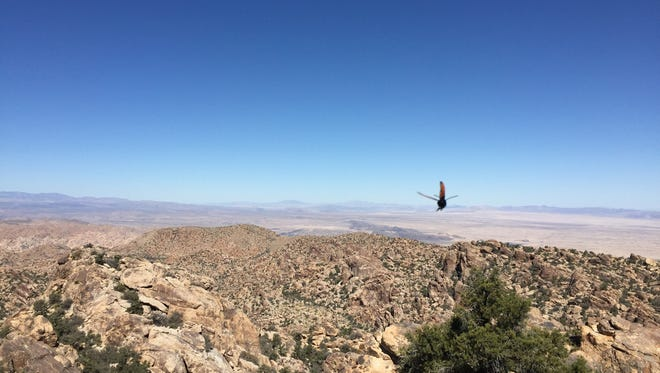 The top of the Queen Mountain trail in Joshua tree National Park reaches to more than a mile above sea level.