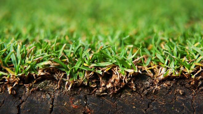 A close up photograph shows the grass on Centre Court at the Wimbledon Lawn Tennis Championships on July 2, 2013 in London, England.