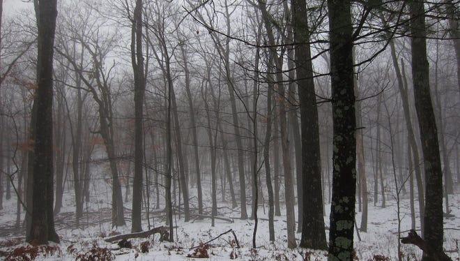 Steve Meurett spent time in a foggy woods looking for a late season deer in December 2014.