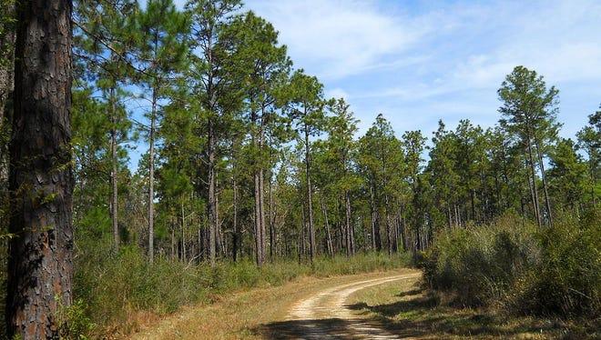 DeSoto National Forest in Mississippi