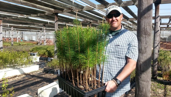 Joshua Stolz, manager of the CSFS Nursery on the CSU Foothills campus, displays seedling trees selected for hardiness and vigor in the Rocky Mountain region and grown for conservation purposes.
