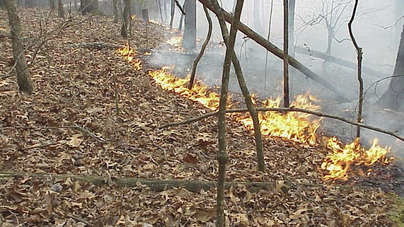 The N.C. Division of Parks and Recreation and North Carolina Forest Service plan prescribed fires, such as this one, at Lake James State Park.