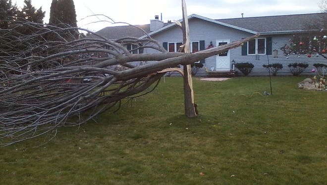 Barbara and David Binnebose said they never heard their 20-year-old maple tree get split in half by high winds sometime in the night.