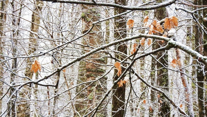 Light snow traces the complex network of twigs in the forest, and we can imagine an even more intricate web of roots and fungi living below the surface.