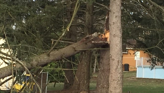 Strong winds downed a tree, causing it to land onto wires on Boeing Road in Fairview Township.