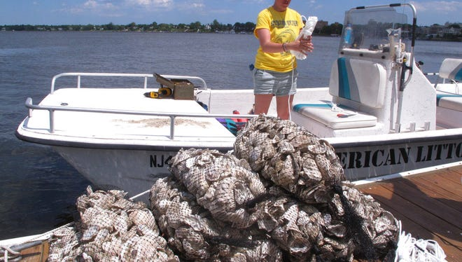 "A volunteer ""oyster wrangler"" with the American Littoral Society prepares to load bags of shells onto a boat in Red Bank. The group is hanging the shell bags off the docks of participating homeowners along the Navesink and Shrewsbury rivers to see if any oysters remain in the waterways in which they once were plentiful."