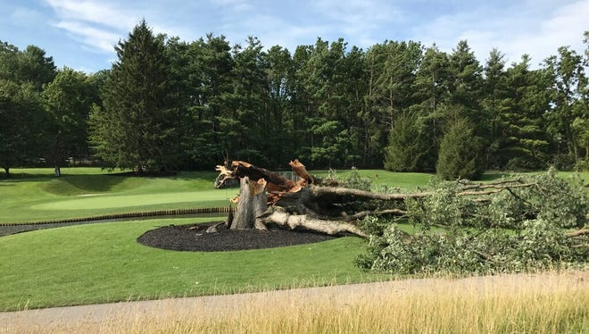 The chinquapin oak tree on hole six of Crooked Stick Golf Club after severe weather tore it down.