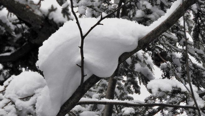 What type of animal do you see here in this lounging snow clump?