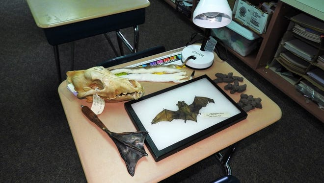 Our MuseumMobile tubs contain all manner of animal bones, skulls, furs, replicas, and other interesting props. This traveling educational program has been teaching kids about the science of nature for forty years or more!