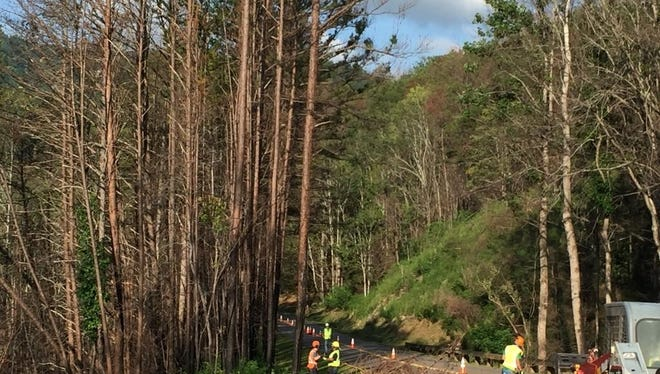 Great Smoky Mountains National Park officials announced that tree-removal crews will implement temporary, single-lane closures along the northbound and southbound lanes of the Spur (US 441) between Gatlinburg and Pigeon Forge, beginning Monday, February 26 through Thursday, March 8.