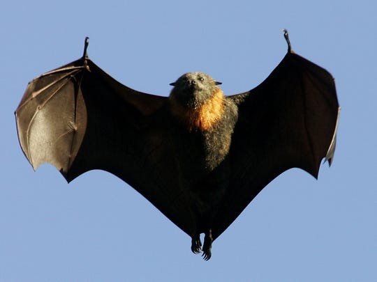 Eight cases of rabid bats have been confirmed in Nevada this year.