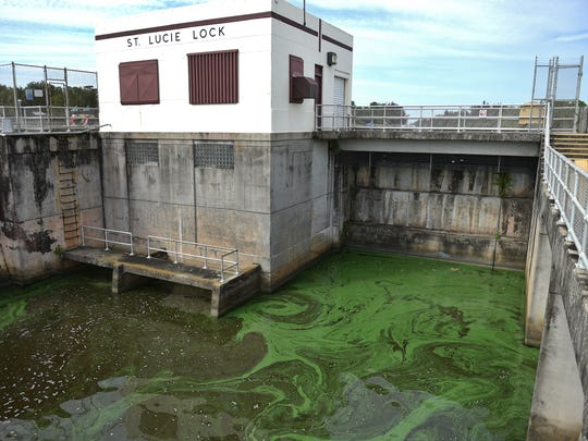 Pools of blue-green algae blooms are seen in the downstream side of the St. Lucie Lock in the C-44 canal leading to the St. Lucie River estuary on July 9, 2018, in Martin County.