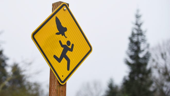 John Kleeman, Parks Operations Supervisor for City of Salem, installs signs at Bush's Pasture Park on Thursday, Feb. 12, 2015, warning visitors of the recent owl attacks. The signs were designed for MSNBC's Rachel Maddow Show, when she featured the story.