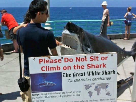 Great White Shark Bite