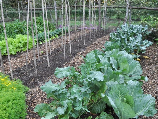 Gardening Fall Veggies