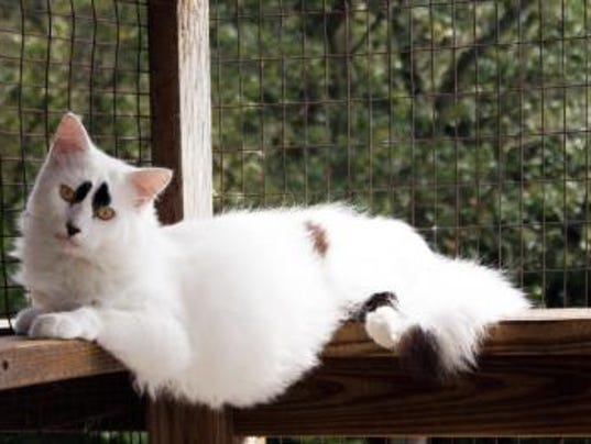 Animal Rescue Inc. cat Brows