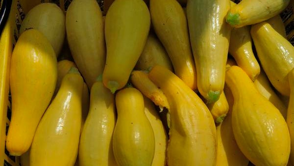 Summer squash makes the perfect seasonal treat.