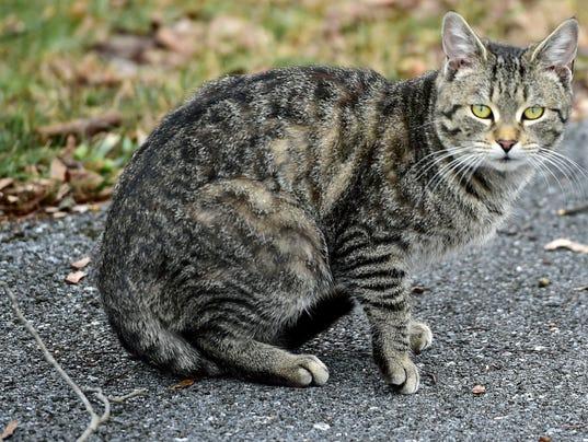 1 CPO-MWD-011216-feral-cat