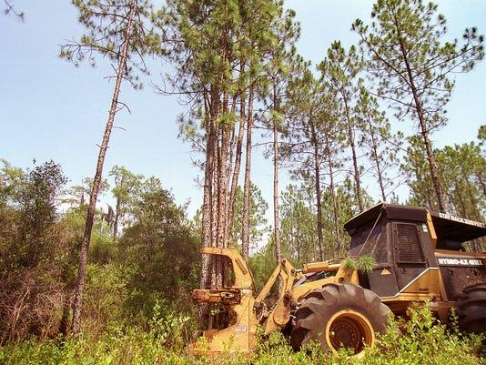 -Timber-Harvesting_ps_0707005b21j7ljth01847w8l4f.jpg_20060825.jpg