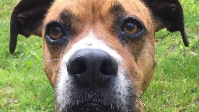Nellie is a sweet pup looking for a home where she'll get lots of love and attention.