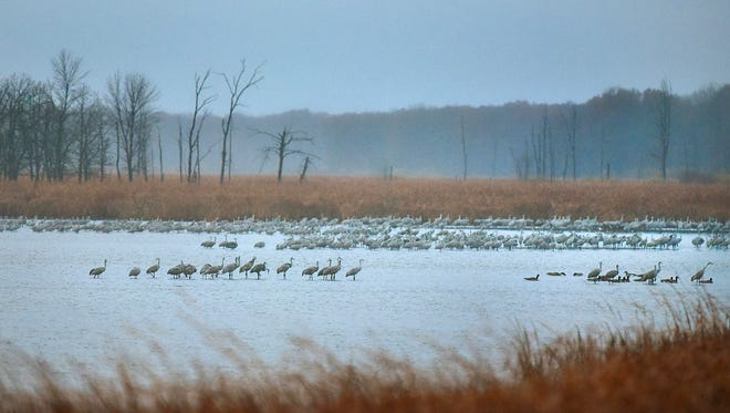 Sandhill cranes gather in a staging area on the St. Francis Pool as the sun rises Oct. 29 at Sherburne National Wildlife Refuge.