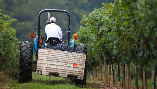 The Biltmore Estate does grow some of its own grapes, but it has to partner with other vineyards for most of them.