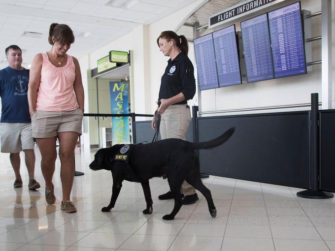 Alphie, A TSA explosives detectionK-9 works at Southwest