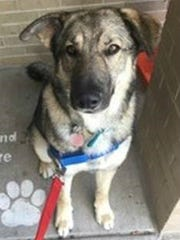 Cipher, who will became the eighth member of Deckers Dogs, was recently matched with a Marine veteran.