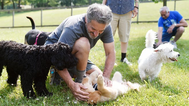 "Gary Iorfido of Newberry Township rubs Tucker, a golden retriever belonging to Christina Noel and Paityn Nissly of Mount Wolf, as other dogs investigate during a Yappy Hour socialization event at John Rudy County Park's Canine Meadows Sunday, June 11, 2017, in East Manchester Township. Sue Wyar, head volunteer with Friends of Canine Meadows, said the group plans to have an event at the dog park on the second and fourth weekends of every month this summer. ""I just want to be able to utilize the dog park more,"" Wyar said."