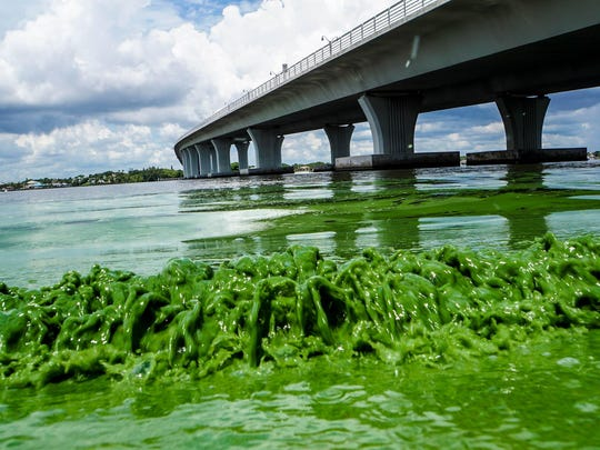 Everglades funding gained new significance this year after toxic algae blooms in the St. Lucie River and Indian River Lagoon on Florida's East Coast drew national attention.