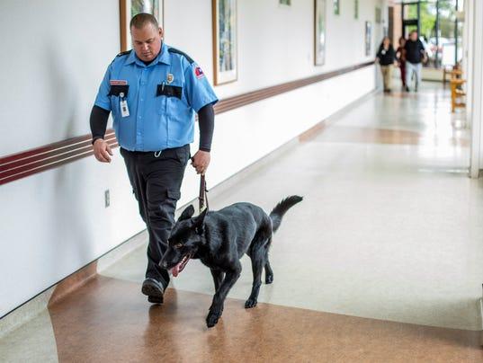 PTH0609 MCLAREN DOG