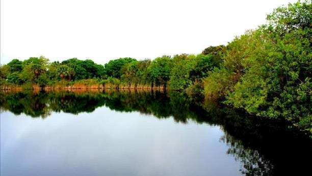 Still waters near Gordy Road Disc Golf in St. Lucie County. Reader-submitted photo
