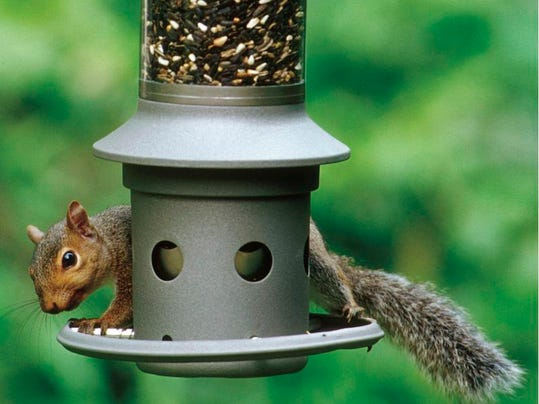 Homes-Outwitting Squirrels (2)