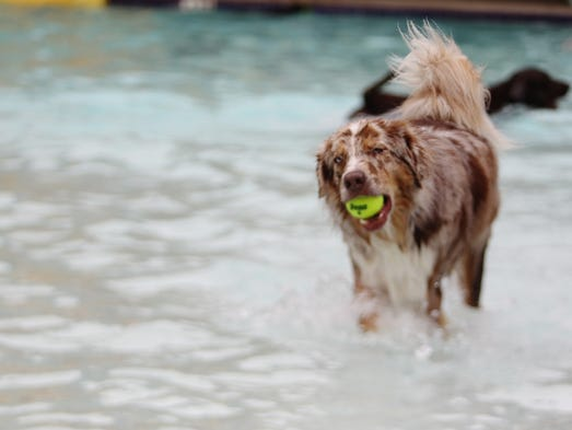 Dogs splashed together in the Trousdell Aquatics Center